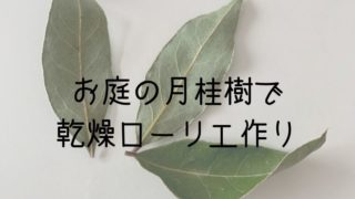 お庭の月桂樹で 乾燥ローリエ作り
